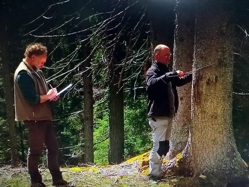 番組の一コマ:山中で伐採用の木の調査
